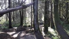 20160331_090034 (ks_bluechip) Tags: creek evans trails preserve sammamish usa2106