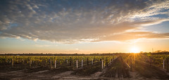 Sunset over The Barossa (Completely Serious) Tags: sunset landscape vineyard southaustralia barossa barossavalley dorrien chateaudorrien