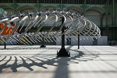 Monumenta serpent curve shadow (Monceau) Tags: metal skeleton shadows serpent grandpalais monumenta
