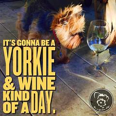 Thanks goodness I have both! (itsayorkielife) Tags: yorkiememe yorkie yorkshireterrier quote