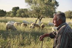 SALVATORE CAVALLO (Aristide Mazzarella) Tags: portrait portraits canon campagna ritratti cavallo ritratto salento salvatore pecore pastore aristide pecora mazzarella