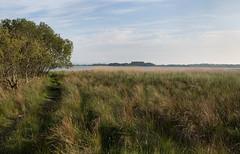 Lytchett Bay evening (arripay) Tags: nature reeds bay harbour wildlife reserve shore dorset trust poole upton lytchett