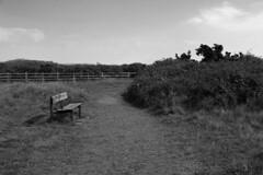 Thurstaston Bench (Daniel Maguire) Tags: uk greatbritain summer blackandwhite bench photography unitedkingdom may photograph wirral merseyside thurstaston danielmaguire