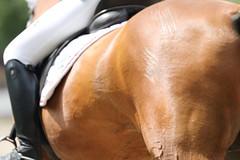 IMG_3411 (dreiwn) Tags: horse pony horseshow pferde pferd equestrian horseback reiten horseriding showjumping dressage reitturnier dressur reitsport dressyr ilsfeld dressuur ridingclub junioren ridingarena pferdesport springreiten reitplatz reitverein dressurreiten dressurpferd dressurprfung tamronsp70200f28divcusd jugentturnier