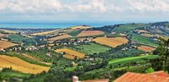 Fermo, Marche, Italy - Countryside - by Gianni Del Bufalo BY-NC-SA (bygdb - Gianni Del Bufalo (CC BY-NC-SA)) Tags: field countryside country hill campo collina fermo collinemarchigiane colture campagnamarchigiana fermofermo