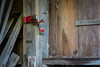 Big Red (paulstewart991) Tags: canon70d canadian country antiques architecture oldbuilding barnboard rusted greycounty
