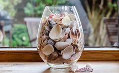 181 ~ 366 (BGDL) Tags: kitchen seashells windowsill glassjar niftyfifty floridashells nikond7000 bgdl afsnikkor50mm118g lightroomcc goingfor4inarow~366