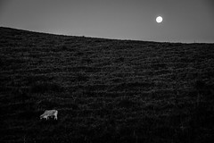 ANOITECER - LAVRINHAS (SP) (EnioCastroMachado) Tags: brazil blackandwhite moon white night rural cow farm lua noite blac anoitecer vaca fazenda valedoparaba
