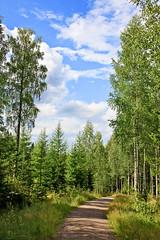 FIN_127 - Kuopio (Viaggiatore Fantasma Summer Tour 2016 - CH-LI-AT) Tags: canon 5d finlandia finland suomi kuopio bosco wood wald