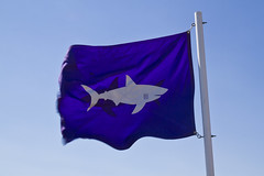 Breezy with a chance of Sharks (brucetopher) Tags: blue signs sign danger warning shark dangerous purple wind flag windy sharks greatwhiteshark seacreatures sharky whiteshark aquaticlife warningflag dangeroussealife