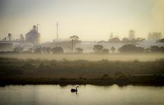 Morning mood (jen 3163) Tags: swan morning pond dam fog industry industrial