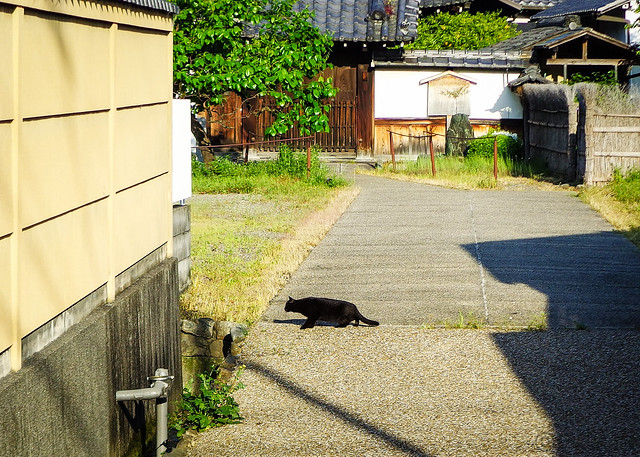 Today's Cat@2015-05-04