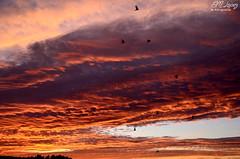 Amanecer de Mayo (E.M.Lpez) Tags: morning sky color primavera maana clouds sunrise contraluz andaluca aves pjaros amanecer cielo nubes mayo jan 2015 alcallareal sierrasurdejan