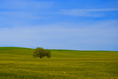 Naúfrago en un océano verde (javipaper) Tags: trees verde árboles cerratopalentino httpswwwflickrcomsearchqpaisaje