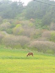 Kandachime, Wild horse
