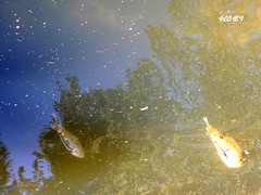 Летючі риби / Flying fishes :-) (ruta / рута) Tags: park blue fish reflection water fountain golden urbannature
