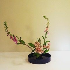 Caroline's #ikebana
