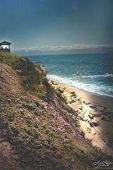 Hillside Light (JeneaWhat) Tags: park beach nature landscape outdoors coast sandiego hillside scripps lajollacove canon550d 24mmf28stm