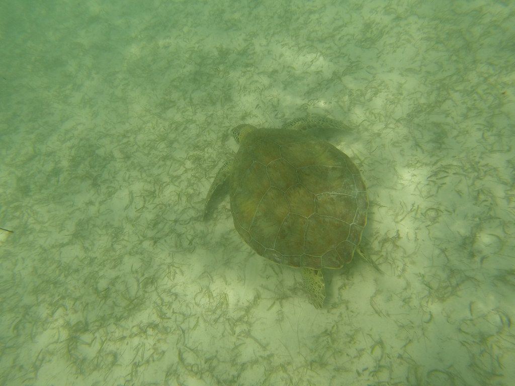 turtle lake muslim Turtle lake is an ideal spot to see green sea turtles, fish, birds and the pristine environment of an inland blue hole we offer kayaks and stand up paddle boards for hourly, daily, and weekly rentals for use on and off the lake.