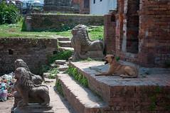20042015-DSC_8698.jpg (seb.grd) Tags: nepal vacances np bhaktapur npal centralregion