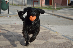 Juego de perros (esencial___picture) Tags: dog photo picture free mascota picoftheday doglover