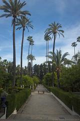 Dorne garden (Lydia Tausi Photography) Tags: sky espaa green beautiful beauty clouds canon garden palms spring sevilla spain palmeras seville cielo alcazar jardines alcazares gameofthrones dorne eos500d lydiatausi
