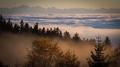 The Sea of Fog (karlbauernhansl) Tags: wood trees orange mist mountains alps tree berg misty fog forrest berge alpen blau bume baum mhlviertel fernsicht seaoffog clearviews