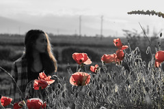 B&W Poppies (George in the Shell) Tags: outside portrait girl colors black white beauty spring life flowers bw red poppy poppies scenery outskirts composition thorns detail canon eos1200d eos