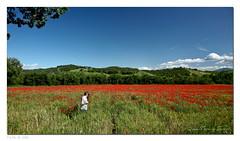 Simon Turner in Tuscany (RD_Elsie) Tags: tuscany poppies toscana valdorcia papaveri