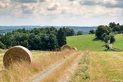 21072016-DSC_0048 (vidjanma) Tags: boules foin chemin paysage