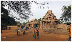 6345 - Wonder in stone-Five Rathas at Mahabalipuram (chandrasekaran a 34 lakhs views Thanks to all) Tags: mahabalipuram architecture india tamilnadu mamallapuram heritage traditions travel culture structures temples scuptures unesco worldheritagesite rockcuttemples canon60d tokina1116mm monuments monolithic rocks rockcutratha elephant lion canoneos760d