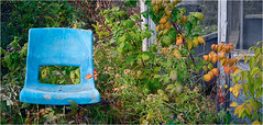 Seating for one, Port Greville, Nova Scotia... Iscorama anamorphic (Small Creatures) Tags: novascotia bayoffundy fundy anamorphic d60 cinemascope portgreville wagstaff cumberlandcounty isco nikond60 iscorama nikkorh85mm