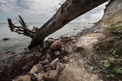 tree (hansekiki ) Tags: rgen jasmund nationalpark ostsee balticsea zeissdistagont2815mm distagont2815 distagon1528ze landschaften canon 5dmarkiii