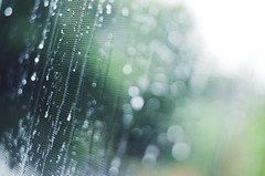2016-07-30_05-15-41 (Liliqe) Tags: bokeh nikond7000 nature scenery rain water rainy