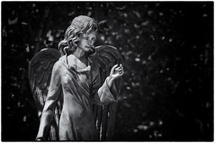 Angel (dominidomk) Tags: statue angel blach white grave grief trauer girl cemetary