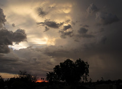 Cumulonimbus Sunset (zoniedude1) Tags: arizona sunset skyscape clouds weather thunderstorms stormyskies cumulonimbussunset phoenix monsoonthunderstorms rain atmosphericobservations cumulonimbus convection rooftopview sunsetsky valleyofthesun skyshow monsoonsunset evening tstorms sundown sky colorful beauty palmtrees silhouettes azsky monsoonseason view color mybackyard light skyline summer desert backyardsunset phoenixsky southwest nature monsoon2016 canonpowershotg12 pspx8 zoniedude1