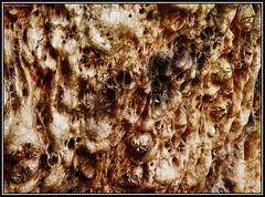 Inframundo.... (Caro Rolando) Tags: madera duendes seres imaginarios seresimaginarios magia bosque rbol
