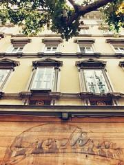 IMG_7197-01 (maurizio siani) Tags: trieste veneto 2016 estate vacanza canon s90 fotografia foto cit city finestra finestre albero