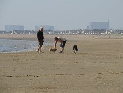 3456 Chatting with man and dog (Andy - Daft as a brush - don't ask!) Tags: 20160816 beach ccc colliedog ddd dog dogwalker kent littlestoneonsea sand sss tots www