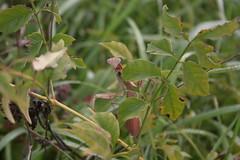 IMG_2899 (Annie Aguirre) Tags: ecp elkhart county parks park benton spillway nature birding birders people walk walks fall