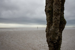 Crosby beach, 'Another place' 4 (nicholasgray4) Tags: crosbybeach anotherplace liverpool gormley sculpture pentax k5ii