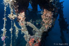 Torpedos on the S-31 Schnellboot (Liz_Rogers) Tags: featured image ocean diving wrecks malta rebreather revo schnellboot wreck ww2