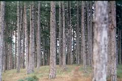 *pink floyd playing* (mariaaa.filipova) Tags: zenitttl kodak iso 200 film analog photography bulgaria bulgarian nature woods forest pirin mountain walk alone trees helios44m summer 2016 russian camera adventure