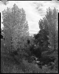 creek and cottonwoods, walnut park neighborhood (mike thomas) Tags: view suburbs colorado denver landscape 150 chamonix yellow rodinal camera fomapan filter 80 100 4x5 fall