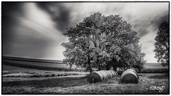 Late Afternoon (dougkuony) Tags: noblepastures cng certifiednaturallygrown pasture fields bales mono monochrome bw blackandwhite hdr