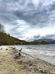 Contemplating a swim (sarahjanequinn) Tags: sky bird clouds scotland ducks shore lochlomond