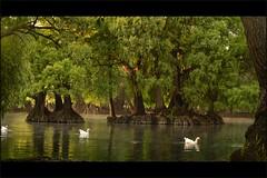 LA PAZ (NIKONIANO) Tags: lake water mexico lago agua nikon eau cricket pound nikoniano méxico michoacán waterenvirons sergioalfaroromero lagosdeméxico lagodecamécuaro camécuro