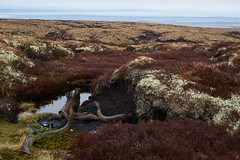 Roots in the past (Donald Beaton) Tags: uk sea wet landscape coast scotland highlands scenery view none heather sony peat stump lichen fe root moor nan muir a7 moray hag firth schottland moorland ecosse carn tritighearnan