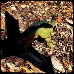 the chase (Chris Blakeley) Tags: seattle dinosaur pterosaur quetzalcoatlus toydinosaur dracorex hipstamatic