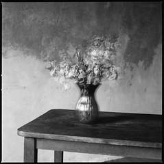 Verwelkte Rosen (Konrad Winkler) Tags: 6x6 stillleben blumen rosen tisch getrocknet mittelformat mehrfachbelichtung hasselblad503cx adoxpan25